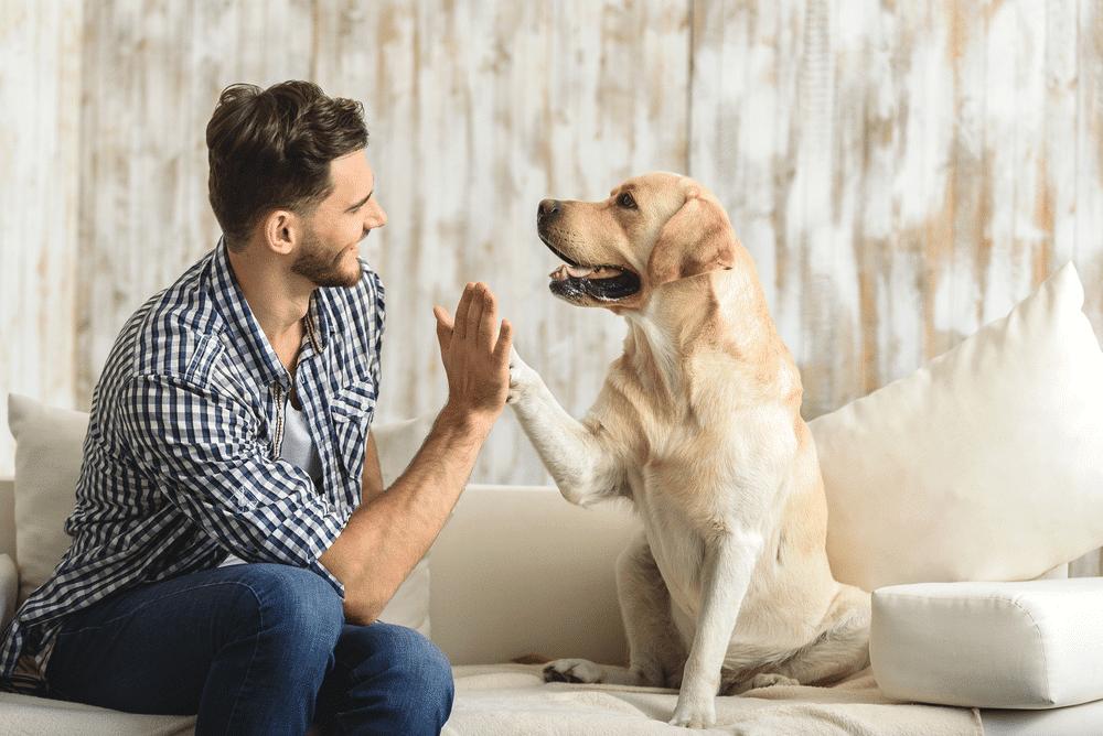 9 Scholarships for Having a Dog 2021