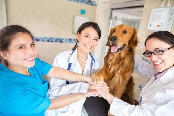 Best Veterinary Schools in the World 2021-2022