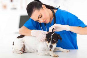job description duties and responsibilities of a vet tech.