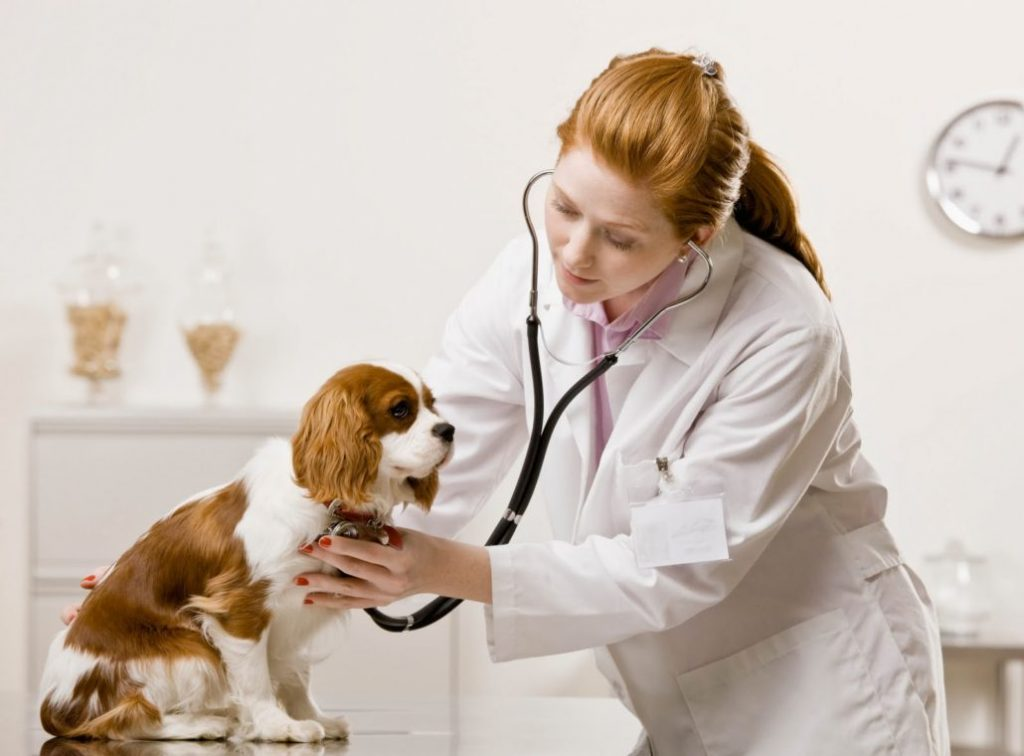what-is-the-job-description-duties-and-responsibilities-of-a-veterinarian